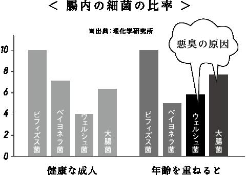 腸内の細菌の比率